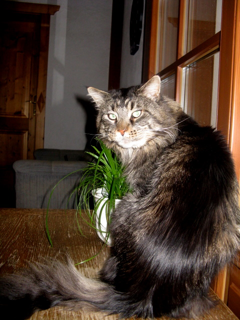 tl_files/bilder/kater/cherryfield/IMG_8296.JPG