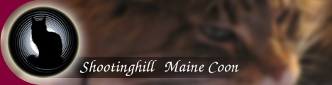 Shootinghill Maine Coon Banner 1/JPG