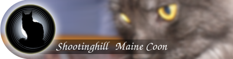 Shootinghill Maine Coon Banner 1/PNG transparent
